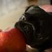 I love an apple.