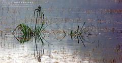 I love Minimalism.....always (Sam Gupta Photography) Tags: india green nature forest canon village natural wildlife greenery soe sanctuary haryana basai flickraward canonindia canoneos60d samguptaphotography tamron70300vcdiusllens
