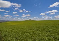 Campo de cereales (Marin2009) Tags: