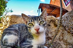 Howdy, folks! (Soma Images) Tags: travel portrait cats jason macro cute green closeup cat photography fuzzy lol kitty images fisheye morocco maroc kitties friendly soma marokko moroccan lolcat somaimages somaimagescom