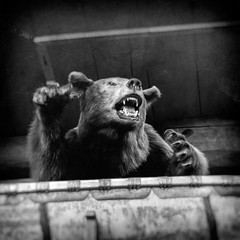a bear in the attic ( explored ) (-william) Tags: bear attic claws hss