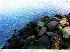 Rocks, Low Tide, North Sea (Bebopgirl1969) Tags: ocean sea seaweed water rocks northsea nairn nairnharbour