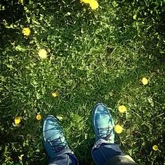 Summer in the city #summer #sun #sunnyday #spb #saintpetersburg #grass #blueshoes #topsiders #flowers #dandelions
