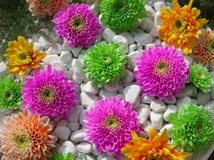 Beautiful Nature Flowers HD Wallpapers For Desktop Background (hameed.asim) Tags: desktop flowers nature beautiful background hd wallpapers