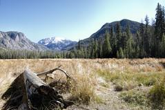 Grand Lake Colorado - USA (MalaneyStuff) Tags: atx116prodx tokinaaf1116mmf28 nikon d5100 tokina colorado gradlake rockymountain nationalpark rockymountainnationalpark meadow northinlettrailhead mountain