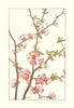 Chinese quince (Japanese Flower and Bird Art) Tags: flower chinese quince chaenomeles speciosa rosaceae hisui sugiura nihonga woodblock print japan japanese art readercollection