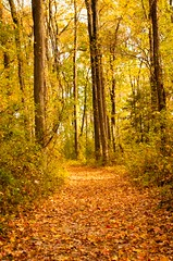 Autumn Path by Sharon Diehl (AccessDNR) Tags: 2016 photocontest fall autumn scenery sceniclandscape northpoint statepark trail path foliage hike