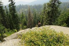 Sequoia, CA (lotos_leo) Tags: sequoia ca california 2015 family