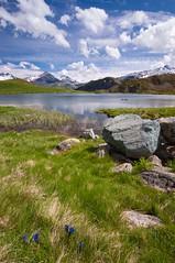 Les gentianes (Pierrotg2g) Tags: paysage landscape nature alpes alps savoie montagne mountain lac lake fleurs flowers nikon d90 tokina 1228