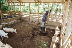 UG1605_158 (Heifer International) Tags: uganda ug