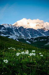 Flowers on a background of mountain (oleksandr.mazur) Tags: above alpine altitude blurred caucasus cliff cloud crag day dusk evening flowers fluffy freedom georgia glacier grass high hill ice icecap landscape light mountain nature outdoor peaceful peak range relax ridge rock scenic sky slope snow snowy summer summit sun sunlight sunny sunset sunshine top tourism travel vacation view wall wide