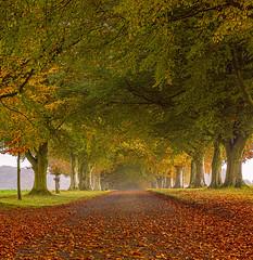 Autumn Colours (Anthony White) Tags: iwerneminster england unitedkingdom gb autumn leaves autumn2016 weather sun sunlight trees nature natur beautyinnature green yellow northdorset nopeople inexplore paisajes