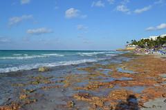 DSC_1317 (juliangarcia922) Tags: cuba travel havana varadero cardenas cuban cars