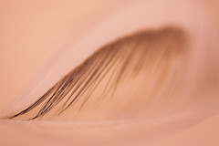 Fallen Angel (Linda_Shapiro) Tags: abstract angel wings macro closeup feather