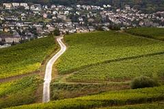 Rdesheim am Rhein (henrystankat) Tags: wein schatten regen rdesheim weg