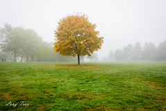Foggy Morning (@ Long Tran) Tags: evry coquibus courcourones trees glass fog morning yellow fall autumn tvlong tvlongsp france nikon nikond700