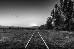 the old line (andy_8357) Tags: sony a6000 alpha 6000 ilcenex nex ilce6000 mirrorless sel 1650 1650mm boulder colorado white rocks trail geese trees train tracks grassland grass sky mountains foothills sunset simplicity space quiet evening stillness serene decay impermanance old unused nature weeds farm land farmland e mount emount