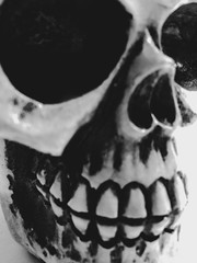 Macro Monday - Spooky and Frightful (f l a m i n g o) Tags: macromonday group spooky frightful frightening skull head face skeleton macro 22296