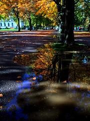 Parc des bastions (silvia.mincarelli1) Tags: autumn leaves parc geneva pozzanghera riflesso reflet