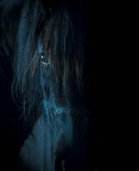 """ Out of the dark "" 50mm# (Kalbonsai) Tags: pferd horses head black paard eye closeup perspekive nikon d5100 50mm"