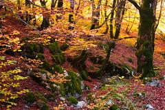 Fall mood (luigig75) Tags: parconazionaledabruzzolazioemolise pescasseroli fall autumn foliage trees woord beech beechwood canon 70d efs1022mmf3545usm abruzzo italia italy