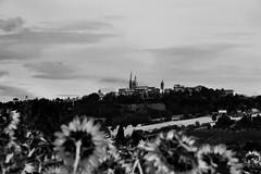 Marchigiana terra (frederik89) Tags: marche corinando campidigirasole paesaggio landscape sunflower sun paese sky bianco bianconero nero