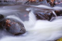 Black River_1 (William_Doyle) Tags: black river hacklebarney state park water movement leaves rocks nature woods trees november 2016 canon vanguard