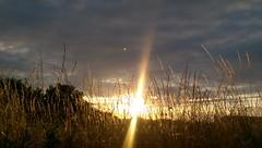 Sonnenuntergang (Qiryx) Tags: getreide