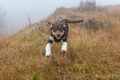 KW 47 2016 (GuinTheReal) Tags: animal baggersee dogs hund hunde kw472016 outdoor wursternordseeküste niedersachsen deutschland de