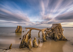Old Driftwood (Stuart Schaefer Photography) Tags: cloudscape navalliveoaksarea gulfbreeze sky outdoors outdoor seascape longexposure driftwood florida water sea serene shore landscape