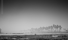 Waiting for the Wind (recaptured) Tags: monochrome landscape blackwhite kerala 70300mm backwaters