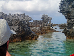 """Uplifted Fossilized Coral """"Feo"""" (tlkohlbush) Tags: tahiti sauvage rangiroa kiaorasauvage"""