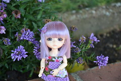 Melody in the Garden (MissLilieDolly) Tags: special elf hk ver lea melody yellow skin normal limitededition latidoll lati doll bjd ribbon purple heart coeur violet fullset collection fleurs flowers garden limited edition missliliedolly miss lilie dolly aurelmistinguette