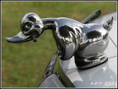 Hood Mascot (Alan B Thompson) Tags: show car picasa olympus ipswich nasc 2013 sp590uz