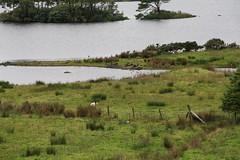 IMG_0795 (CarloA) Tags: ireland connemara clifden ireland2013