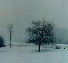 winter in holland (8) (bertknot) Tags: winter winterinholland