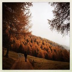 Favola autunnale #valtellina #bormio #autumn #mountain #colours #nature #forest #trees #leaves (dada2005) Tags: legacy panoramafotogrfico hipstamatic lentejane pellicoleinas1982