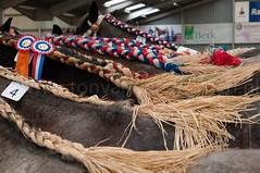 DSC_6720 (Ton van der Weerden) Tags: horses horse dutch de cheval belgian nederlands belges draft chevaux belgisch trait trekpaard trekpaarden ckcentralekeuringsintoedenroderaffiawol