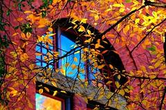 IMG_7870 (fallingwater123) Tags: autumn fall canon nashville tennessee fallcolors vanderbilt autumncolors foliage scenicbeauty vanderbiltuniversity middletennessee canon60d owenschoolofbusinessmanagement