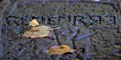 Remember (chrisjohnbeckett) Tags: autumn fall rain word leaf war remember peace bokeh text raining remembrancesunday canonef135mmf2lusm chrisbeckett