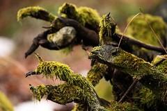 mostri. (andrea minoli) Tags: andrea muschio varese animali mostri minoli gallarate 2013 21100