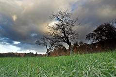Bug's vision (Claudia Gaiotto) Tags: autumn trees sky field grass clouds pov bugsvision malasmetterdimettermiapelledileoneognivoltachemistoafracicaretuttaormai