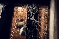 web 0.0 (herr_der_inge) Tags: dark keller spider basement spiderweb spinne cellar dunkel spinnennetz 18105 nikond90