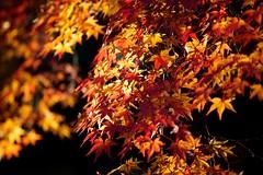IMG_5093 (Thomo13) Tags: autumn red fall leaves yellow japan canon temple eos kyoto mark ii 5d kiyomizu koyo momoji