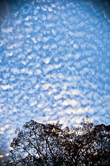 2013 11 06 - 3482 - DC - Clouds (thisisbossi) Tags: trees usa clouds washingtondc dc nw skies unitedstates northwest highcontrast midcity