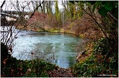 Rope Swing (JSB PHOTOGRAPHS) Tags: river rope swing willamette 18300mm nikond1h dsc005301