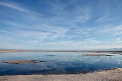 IMG_0177 (rovinglight) Tags: chile pink flamingoes desert wildlife atacama laguna chaxa antofagasta soncor