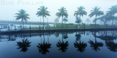 Fort Myers Yacht Basin on a Foggy Morning (tropicdiver) Tags: fog reflections boats florida palmtrees fortmyers fortmyersyachtbasin vision:mountain=0541 vision:outdoor=0899 vision:sky=0829