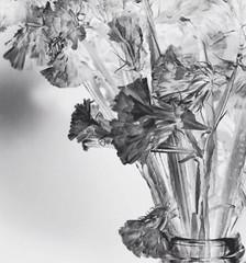 Radiografía (Vallelitoral) Tags: old flowers blackandwhite bw cute art blancoynegro vintage nice arty bn retro negativo flickraward vsco vscofilm vscocam