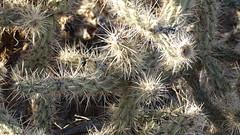 DSC06715 (jorgehevia2003) Tags: 2009 arizonausa viajelasvegas2013 grancanonarizona